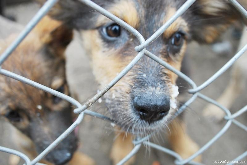 В притулку для тварин у Калуші припинили стерилізацію – немає умов
