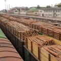 Депутати з'ясовують, скільки деревини вивезли з Прикарпаття. ВІДЕО