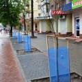 На центральній вулиці Франківська до свят висадили молоді деревця