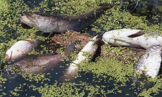 Екологічне лихо: на Снятинщині у ріці Турка гине риба