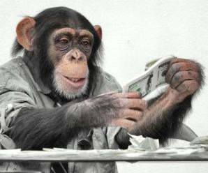 Науковці повідомили, що у поведінці мавп та політиків є схожість