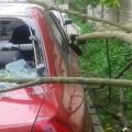 У Франківську дерево впало на машину (ФОТО)