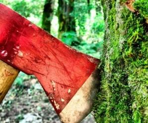 На Прикарпатті засудили двох підлітків, які зрубали дев'ять смерек, щоб купити собі одяг