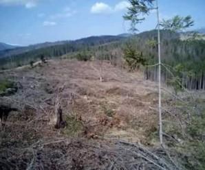 На Івано-Франківщині СБУ викрила незаконний експорт лісу