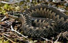 Укус змії: як швидко і правильно надати першу допомогу
