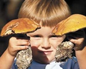 На Франківщині трирічна дитина отруїлася грибами