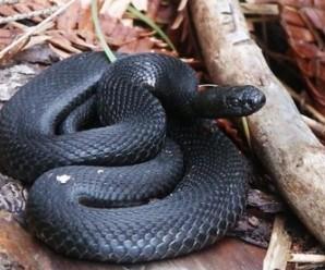 В курортному Татарові змія напала на туриста з Луцька