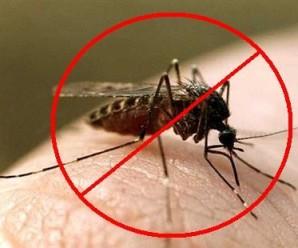 Студент Харківської зооветеринарної академії «привіз» із Гани до України тропічну малярію