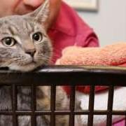 Кіт дивом вижив після прання в машинці
