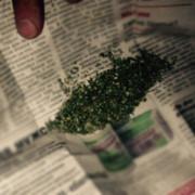 На Прикарпатті за зберігання наркотиків юнакові загрожує кримінальна відповідальність