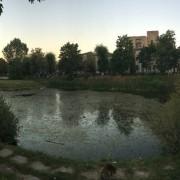 Івано-франківці побоюються, щоб озеро на «БАМі» не захопив черговий забудовник (фото)