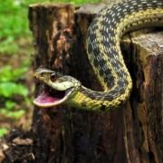 Прикарпатка потрапила до реанімації після того, як її укусила змія