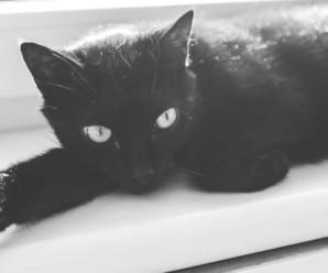 На Прикарпатті у ветеренарній клініці скажений кіт покусав 62-річного чоловіка
