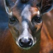 Вчені розширили список тварин, які вимирають