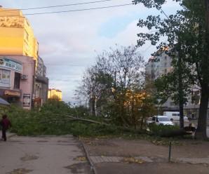 На Стуса вітер повалив величезну тополю на тротуар (ФОТО)