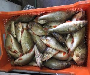 У Франківську стартує набір у рибоохоронний патруль
