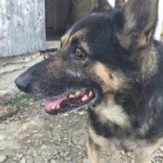 У Калуші невідомі отруїли чотирьох собак. Вижила тільки одна