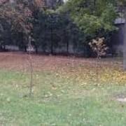 На Полтавщині знайшли голову жінки серед дерев