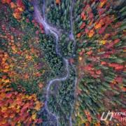 Кольорові Карпати: вражаюча осінь біля Дземброні з висоти польоту птахів (фотофакт)