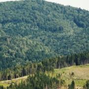 На Надвірнянщині триває масштабне винищення лісів (ВІДЕО)