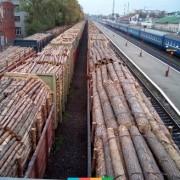 Працівники прокуратури викрили підприємство, яке за підробленими документами намагалося експортувати з Прикарпаття понад 600 куб. м. лісу
