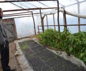 Газдівський старт-ап: Як один невдалий випадок допоміг прикарпатцю розпочати аграрну справу (фото)