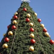 У центрі Франківська встановлять штучну новорічну ялинку за 562 тисячі гривень