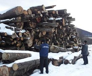 На Прикарпатті поліція затримада підприємця, який намагався незаконно експортувати ліс (фото)