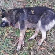 У Калуші невідомі перерізали собаці горло (фотофакт 16+)