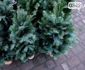 Визначили місця продажу живих ялинок у Івано-Франківську (ПЕРЕЛІК)