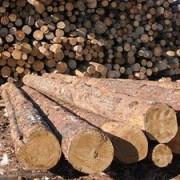 Нардеп від Прикарпаття закликав депутатів ВР не допустити обміну українського лісу на європейський кредит
