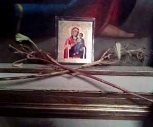 На Львівщині у церкві біля ікони зацвіли сухі лілії