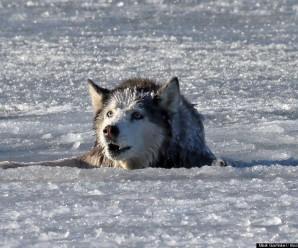 У Франківську чоловік врятував собаку, що провалилась під лід