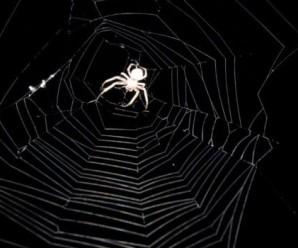 Чому не можна вбивати павуків