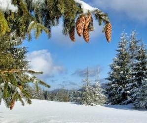 В Україні різко потеплішає – прогноз погоди на тиждень