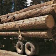 На Прикарпатті дерев'яна колода вбила чоловіка