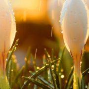 Зима йде на пенсію: 18 лютого на українців чекає серйозне потепління – синоптик