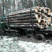 """На Прикарпатті перекинувся """"Урал"""" з лісом. Одна людина загинула"""