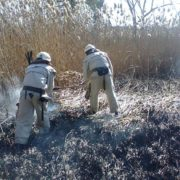 Масштабну пожежу сухої трави гасили пожежники Старого Лисця. ФОТО