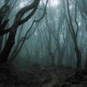 У лісосмузі поліція виявила тіло студентки, яка вчинила самогубство