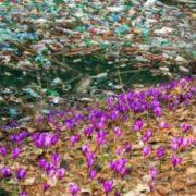Новий Содом: мережу шокували сміттєві ріки у заповідній зоні Закарпаття (відео)