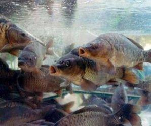 Протягом двох місяців в області заборонено рибалити — нерест риби