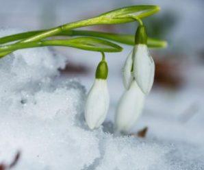 Сніг і зміна погоди: прогноз синоптиків на тиждень