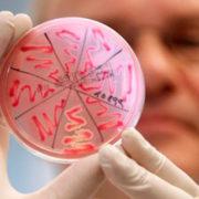 Ще одна жертва смертельного вірусу: на Прикарпатті від небезпечної інфекції помер третьокласник