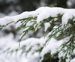 Сніг і мороз: на Прикапатті оголосили штормове попередження