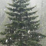 Весна відміняється! На Прикарпатті випав обіцяний синоптиками сніг. ФОТО