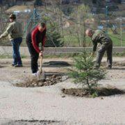 Курйоз: у Ворохті ями на дорозі засадили деревами (фото)