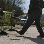 У Ворохті в ями посадили дерева: люди вимагають ремонту дороги. ФОТО