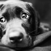 На Валах у Франківську невідомі отруїли собаку – соцмережі обурені (ВІДЕО)