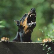 Вулична небезпека: за тиждень невідомі тварини покусали шістьох франківців